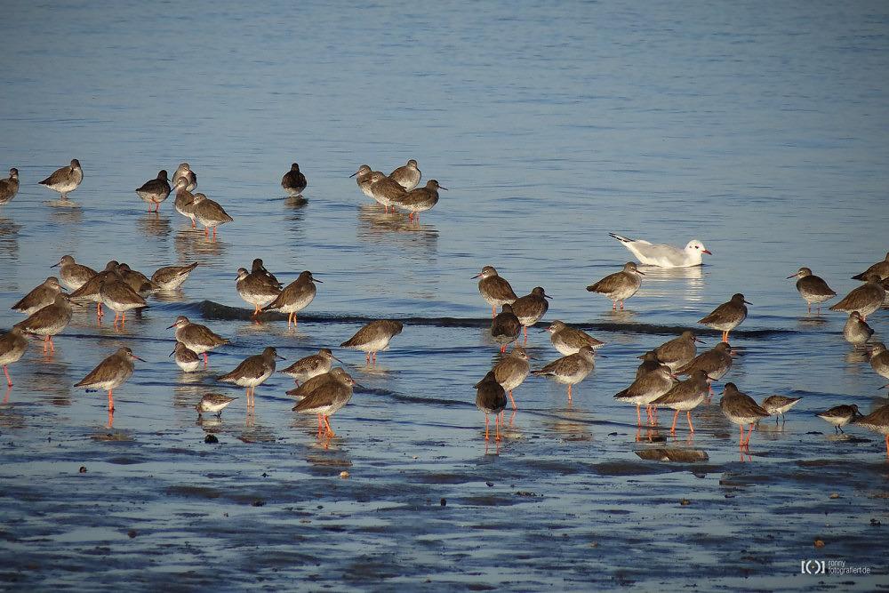 Foto Vögel im Watt von Bärbel Stork