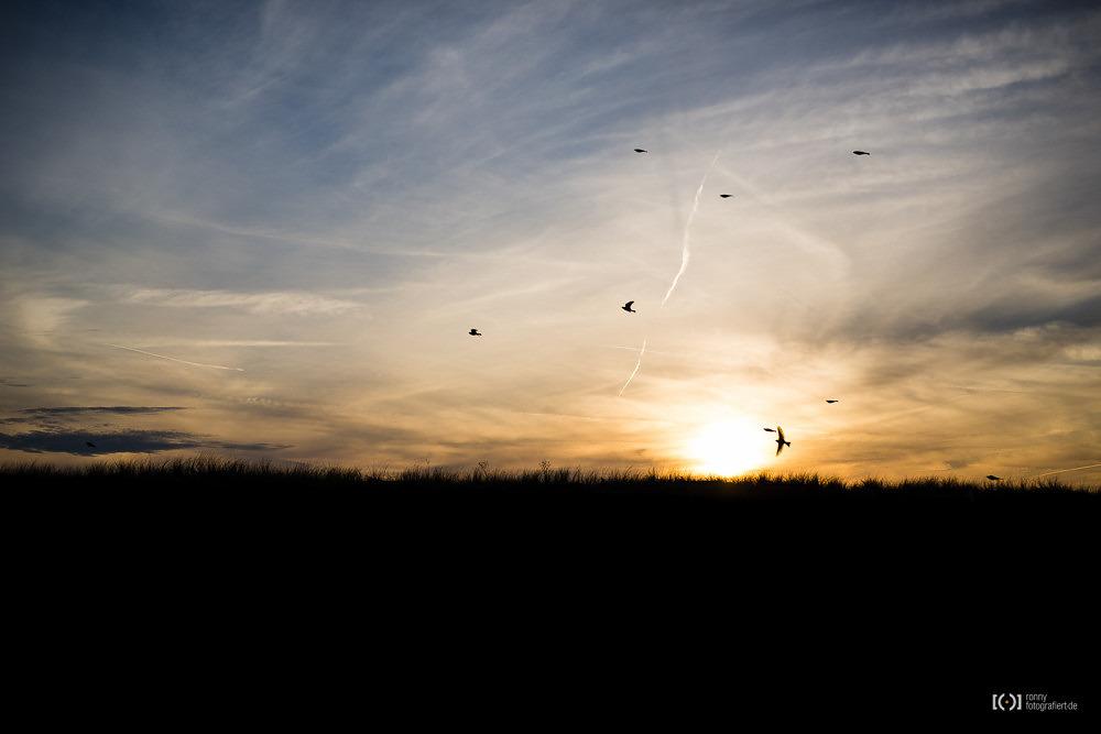 Foto Vogelschwarm im Sonnenuntergang von Ronny Walter