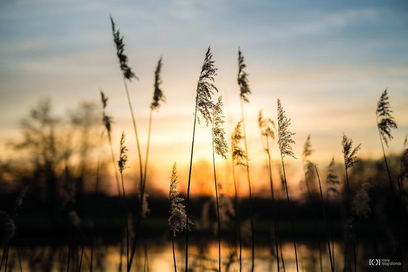 Foto Sonnenuntergang an der Haaren in Oldenburg von Ronny Walter