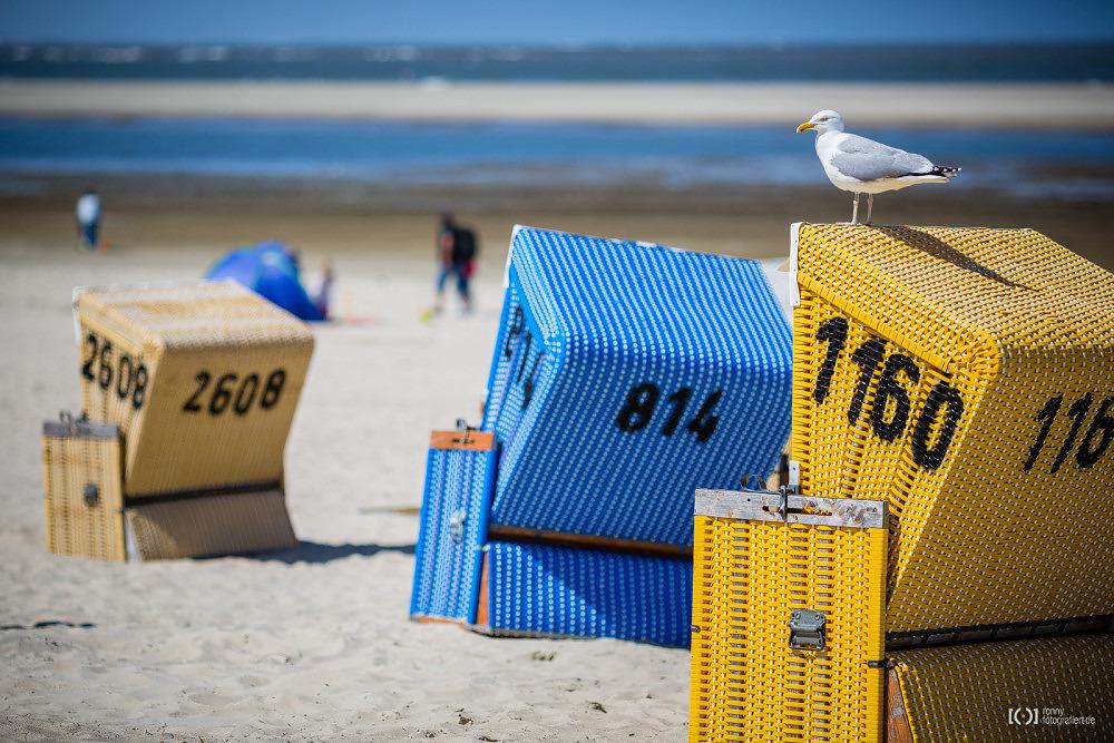 Foto Möwe auf Strandkorb auf Langeoog von Ronny Walter