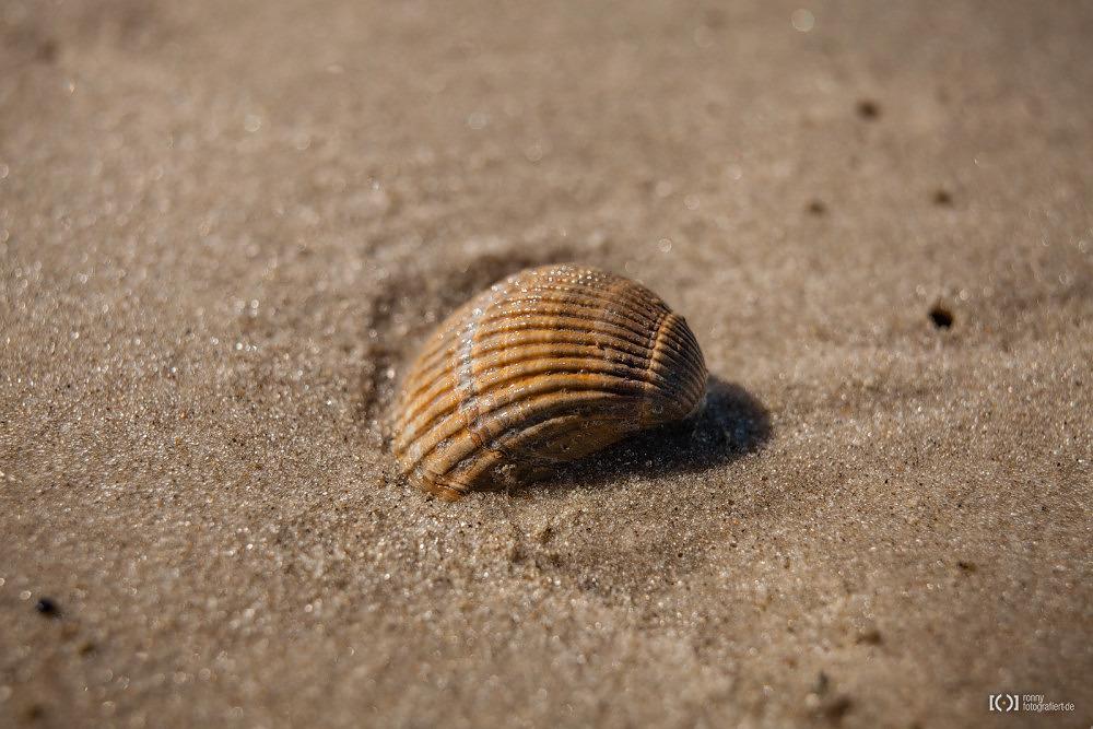 Foto Muschel am Strand von Langeoog von Ronny Walter