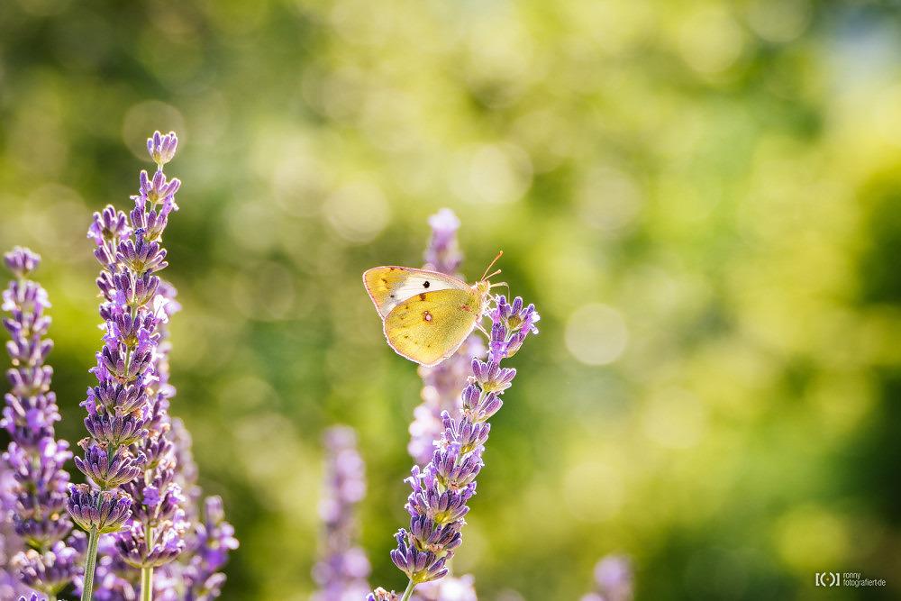 Foto Schmetterling in der Provence von Bärbel Stork