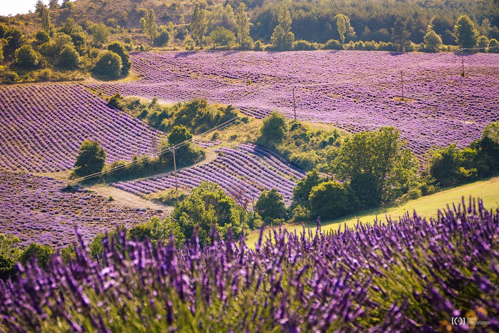 Foto Lavendelfelder in der Provence von Bärbel Stork