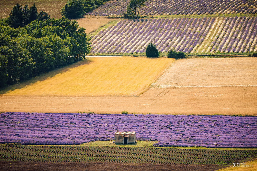 Foto Lavendelfelder zwischen Aurel und Salt von Ronny Walter