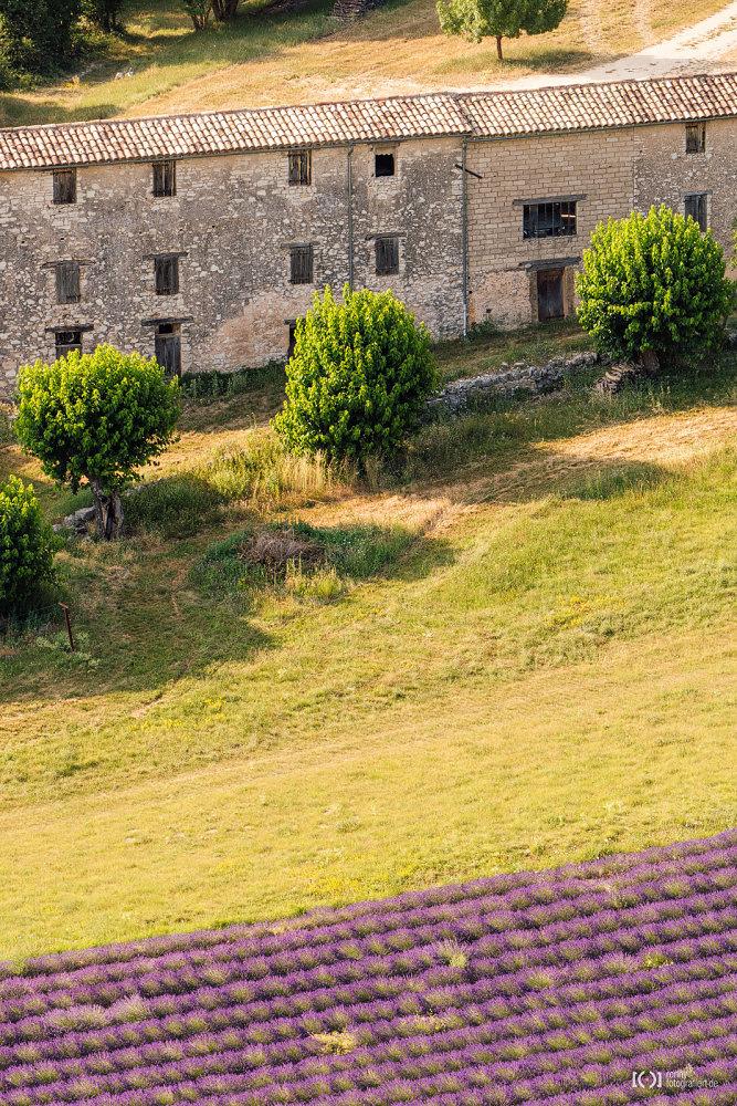 Foto Ein Hof zwischen Lavendelfeldern von Ronny Walter