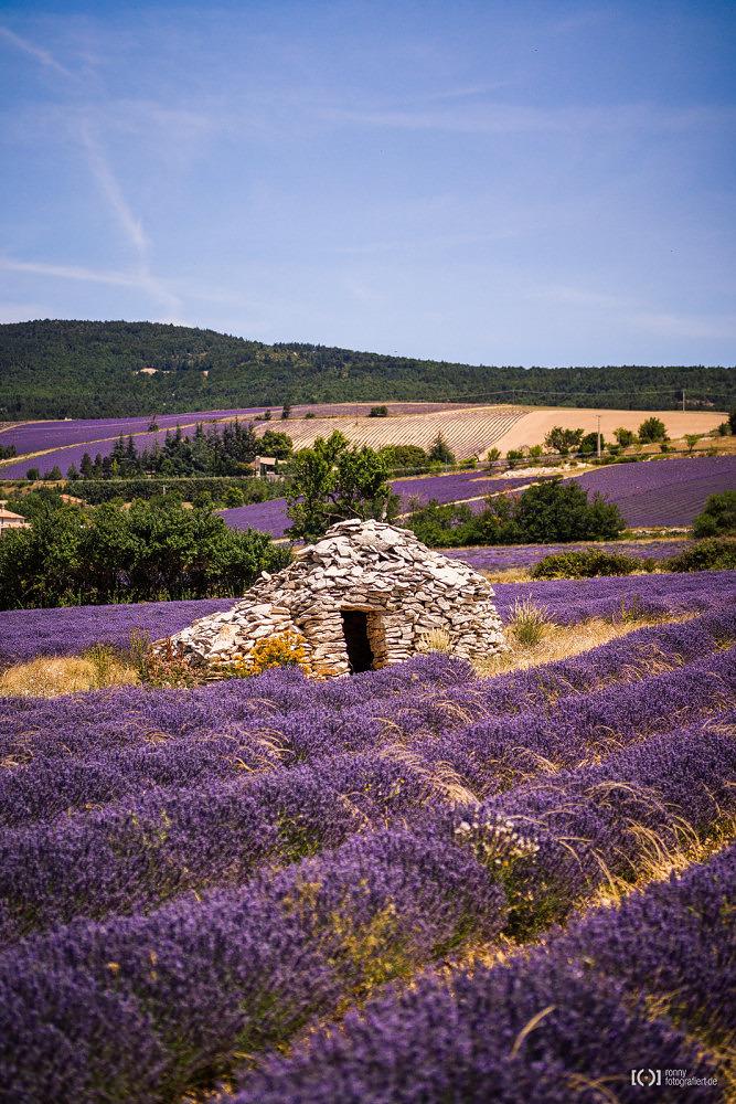 Foto Lavendelfeld mit einer Borie von Ronny Walter