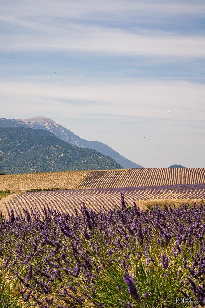 Foto Blick über Lavendelfelder auf den Mont Ventoux von Ronny Walter