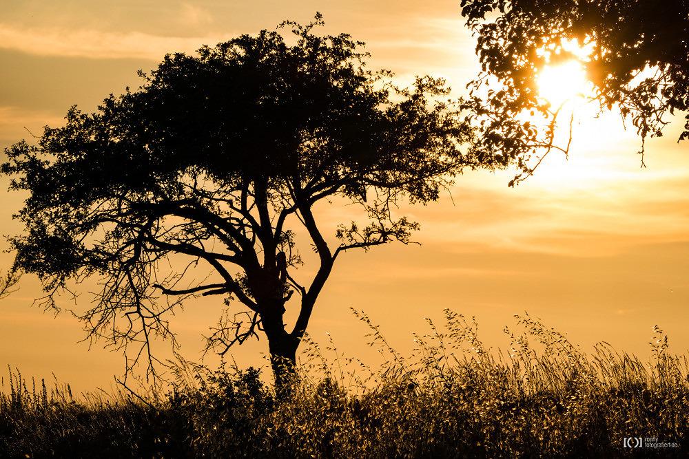 Foto Sonnenuntergang bei Sault von Bärbel Stork